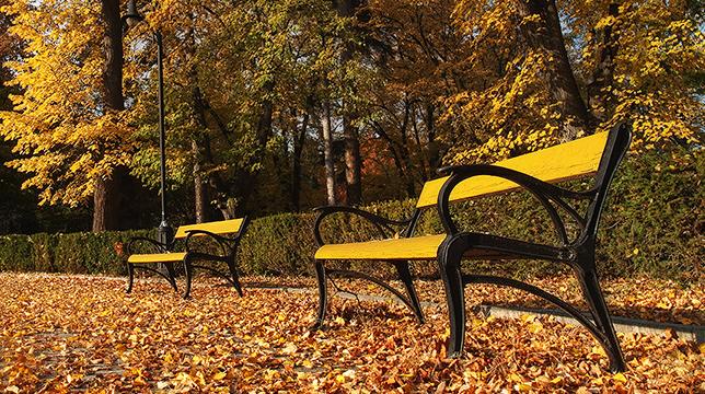 Resultado de imagem para imagens  de um banco de praça com folhas atrás